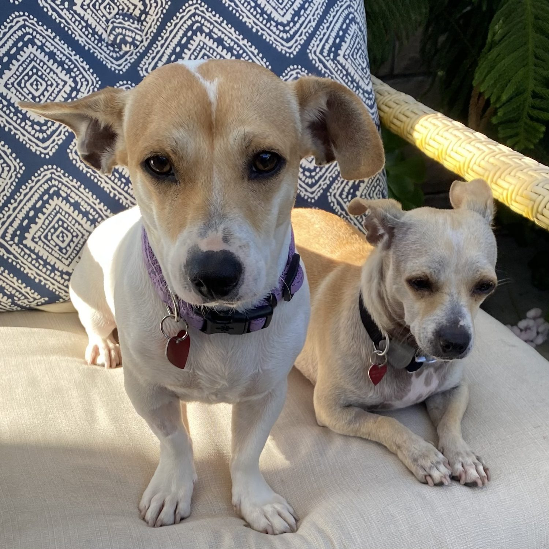 Hazel and Mauve