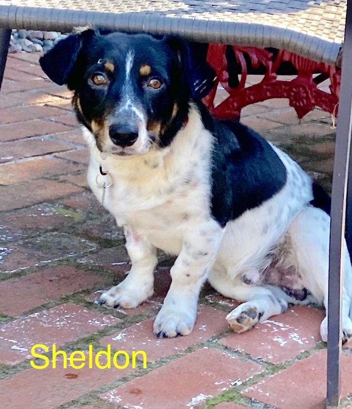 SHELDON-ADOPTION PENDING